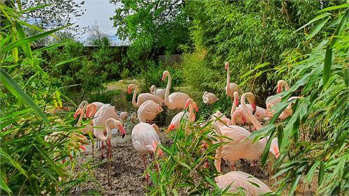 Flamingos im Zoo Salzburg