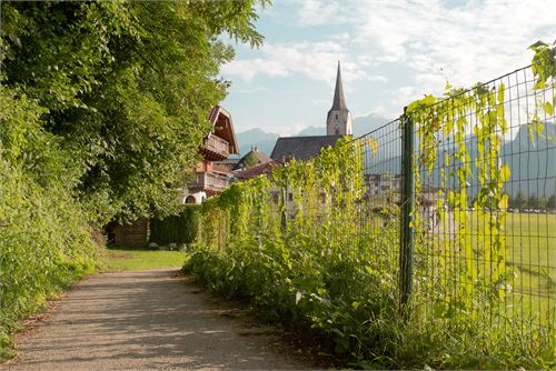 Pfarrkirche Puch - Brennnessel sammeln