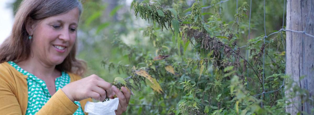 Brennnesseln sammeln in Puch © Silja Parke - wildemöhre.at