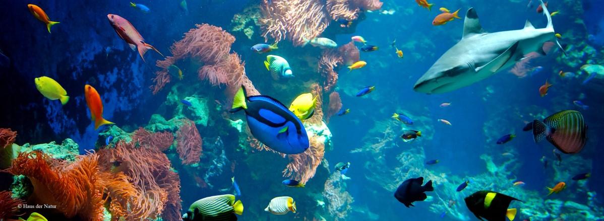 Korallenriff © Haus der Natur in Salzburg