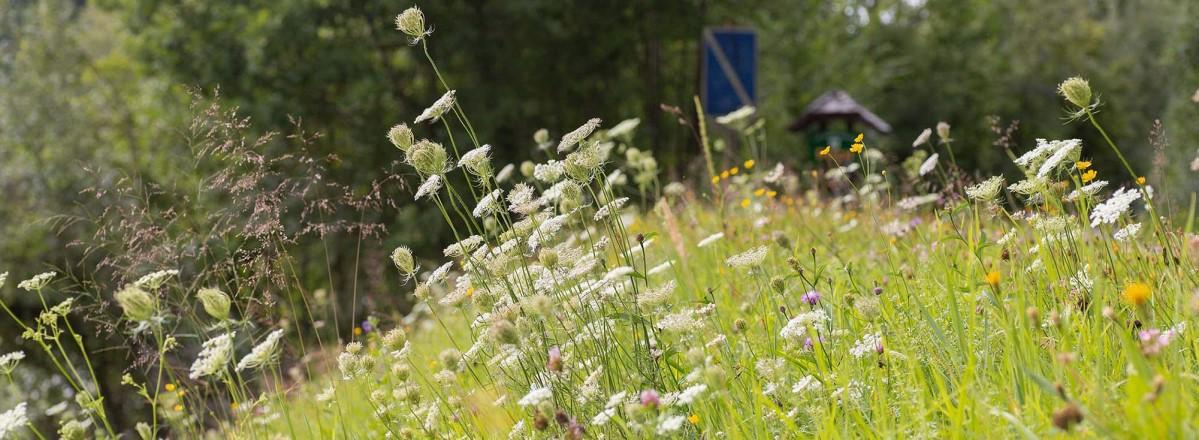 Artenreicher Blühstreifen in Puch Urstein © Silja Parke - Wildemöhre.at