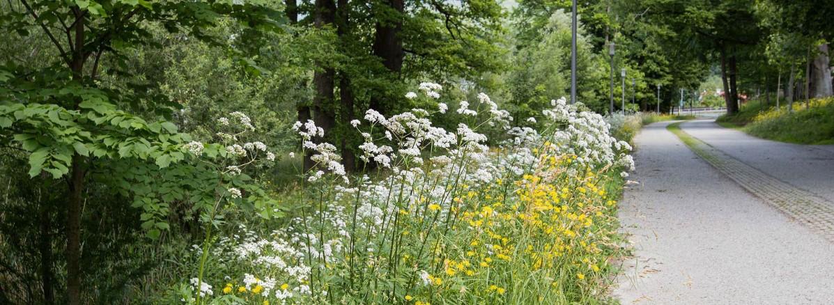 Wildkräuter in Puch © Silja Parke - Wildemöhre.at