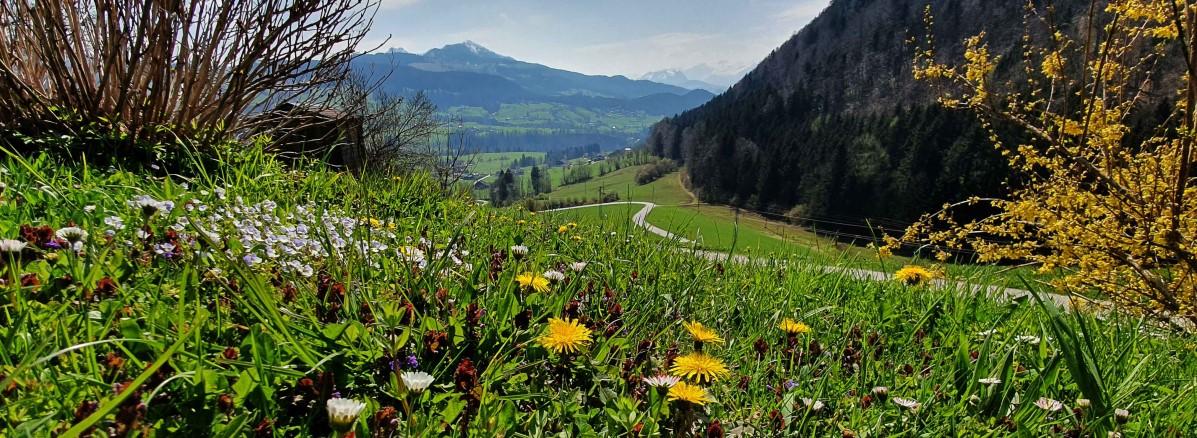 Frühlingsblick ins Wiestal ©TVB Puch