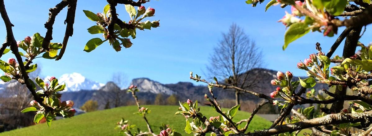 Frühling Barmsteine ©TVB Puch