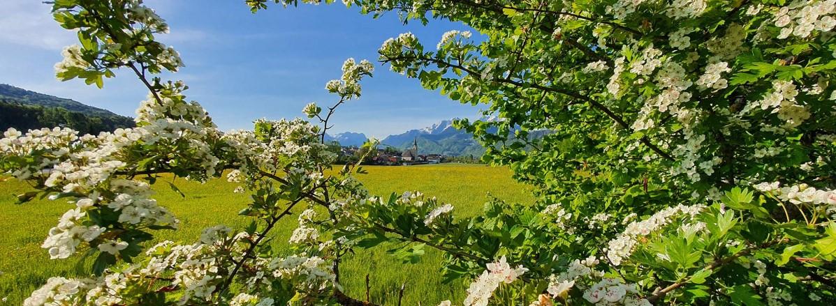 Frühlingsblick nach Puch  ©TVB Puch