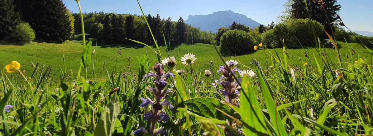 Frühlingsblick auf den Untersberg ©TVB Puch
